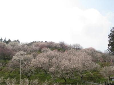 梅の里公園 1