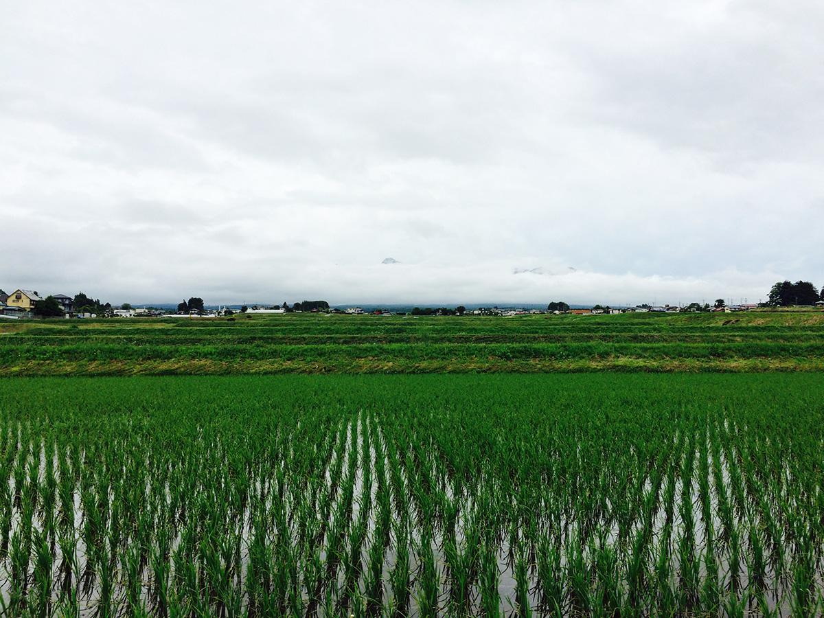 20150609_yatsugatake.jpg