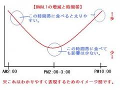 BMAL1.jpg
