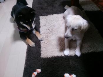 150605犬