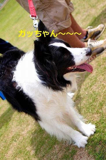 10_20150611094703694.jpg