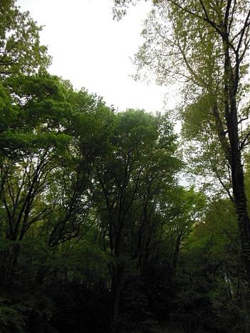 中央公園の緑2