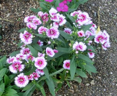 150114-散歩道の花①-1
