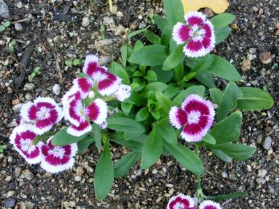 150114-散歩道の花①-2