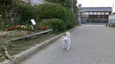 150123-銀時散歩①-1