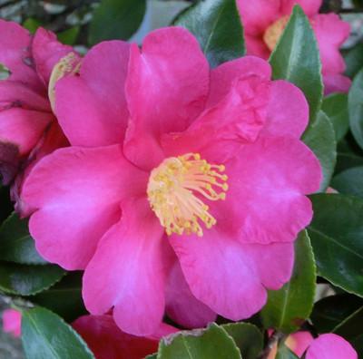 150123-散歩道の花①-5