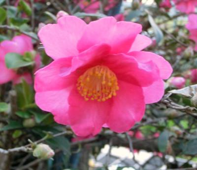 150123-散歩道の花①-2
