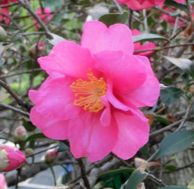 150123-散歩道の花①-3