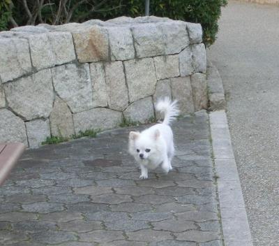 150211-銀時散歩-1