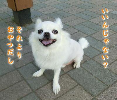 150310-銀ちゃんいいんじゃない-1