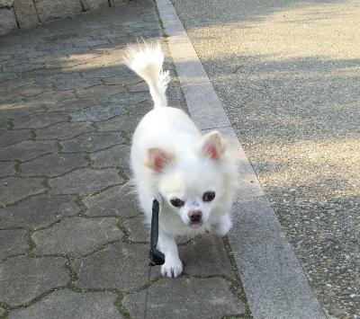 150323-銀ちゃん散歩①-4