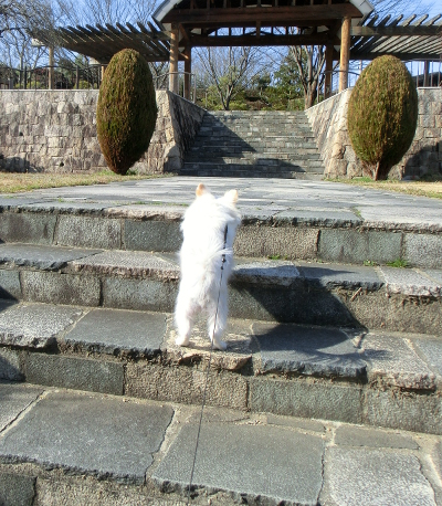 150401-銀ちゃん散歩-2