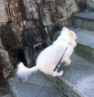 150401-銀ちゃん散歩-3