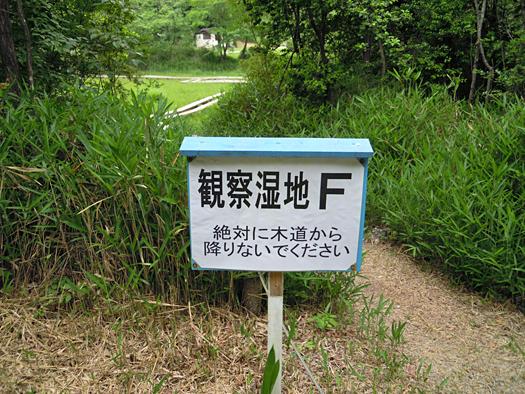 観察湿地F。