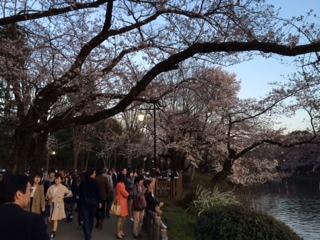桜井の頭公園
