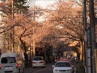 桜市役所通り