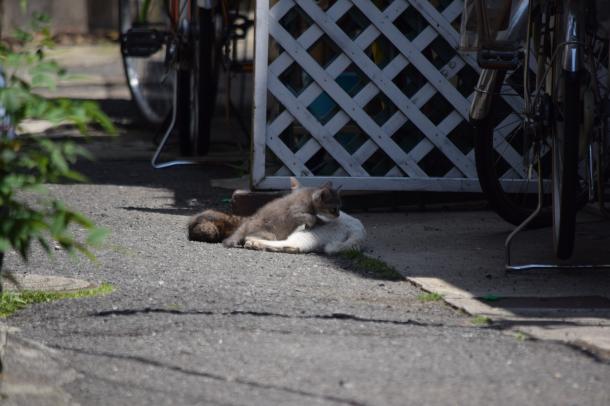 猫7,8,9v