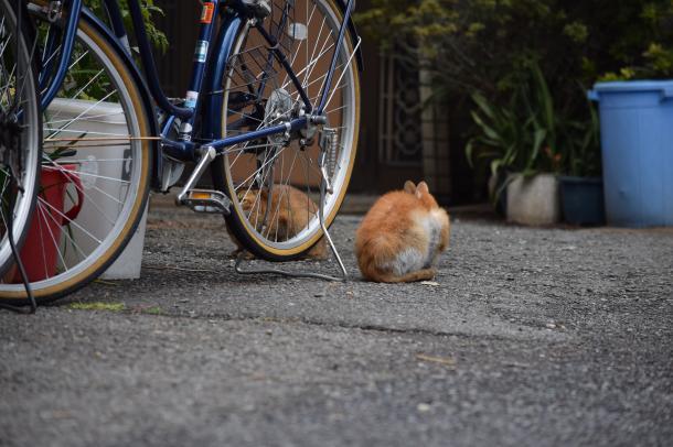 猫13,14