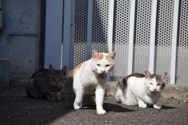 猫12,13,14