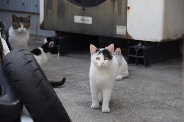 猫11,12,13,14