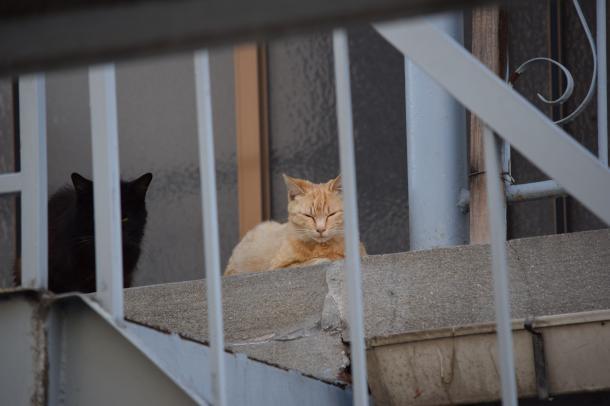 猫9,25