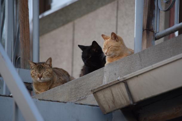 猫9,23,25