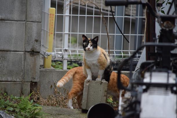 猫29,31