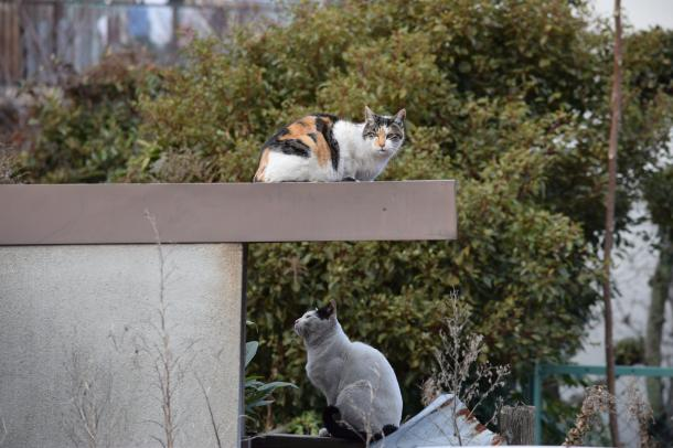 猫40,41