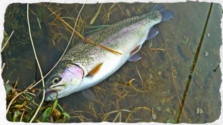2015 釣り初め (2)