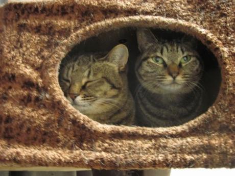 ボックスの姉妹