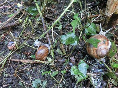 Fr_snail01.jpg