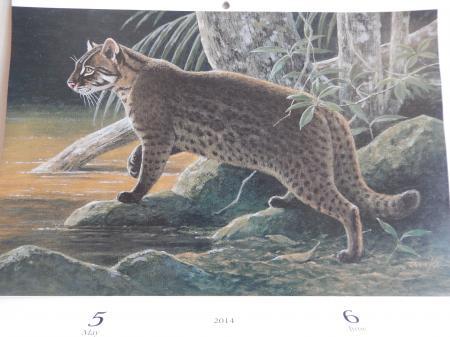 田中豊美 2014 カレンダー 5・6月