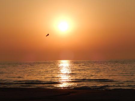 青谷海岸 帰巣