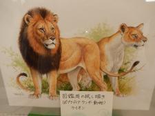 田中豊美 個展 #9
