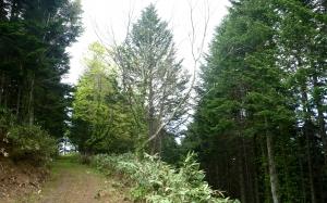 道民の森3