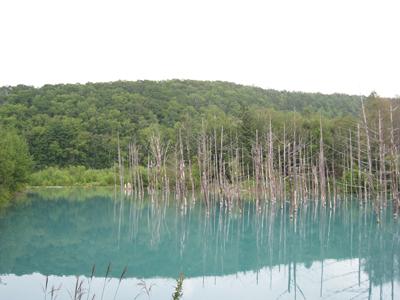 1508 青い池