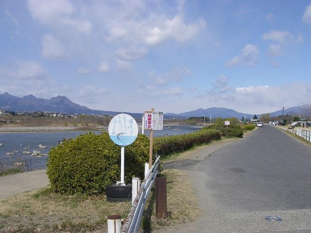 2015年3月25日利根川大渡橋左岸上流(大嶋)