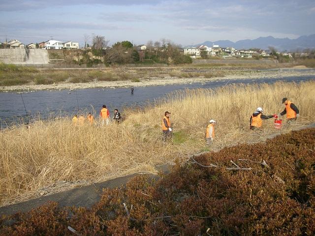 2015年3月29日利根川大渡橋左岸上流午前7時頃ヤマメニジマス成魚放流撮影(大嶋)