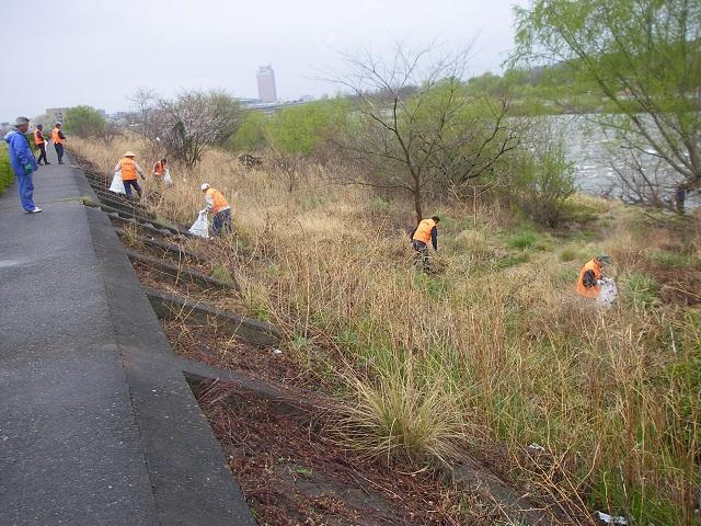 2015年4月5日利根川左岸上流午前6時30分頃河川清掃(大嶋)