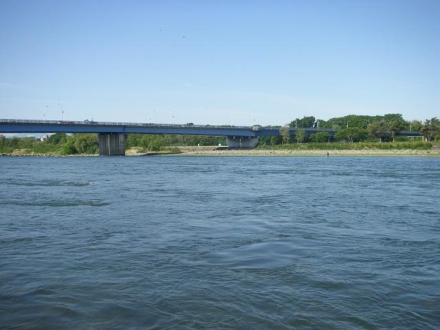 2015,05,11、午前7時40分頃の利根川大渡橋左岸上流(大嶋)