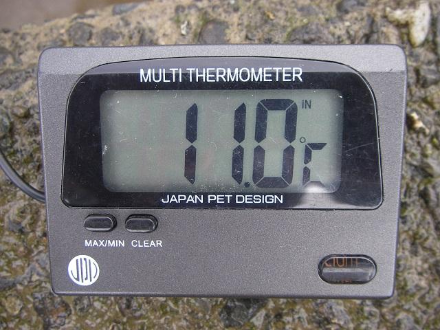 P5190095 利根川 大渡橋.jpg