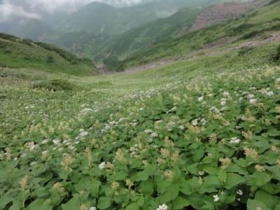 利尻島 248