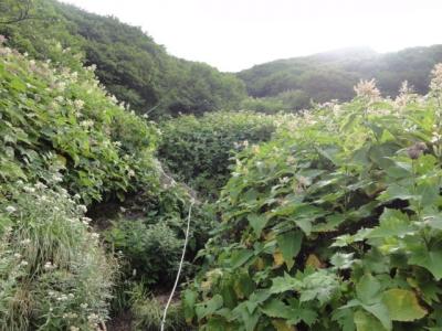 利尻島 261