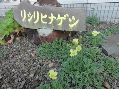 利尻島 308