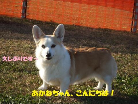 008_convert_20141231045040.jpg