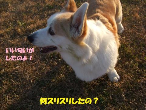 019_convert_20141231045511.jpg