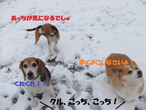 031_convert_20141224025326.jpg