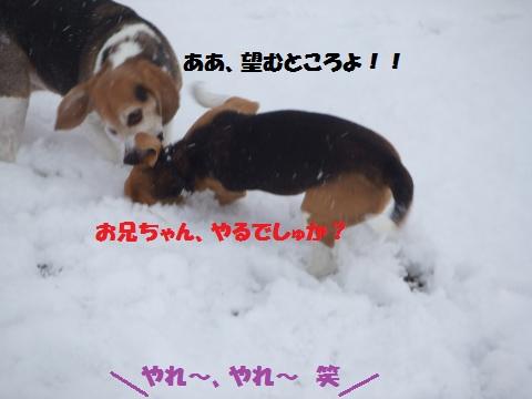 040_convert_20150113043016.jpg