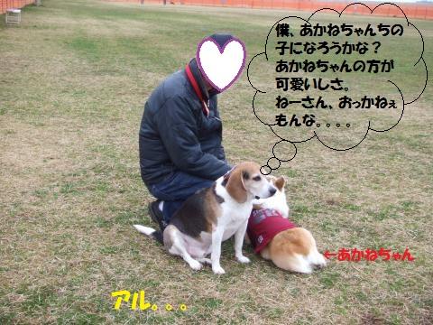 055_convert_20150309035235.jpg