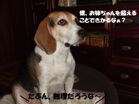 058_convert_20150121061456.jpg